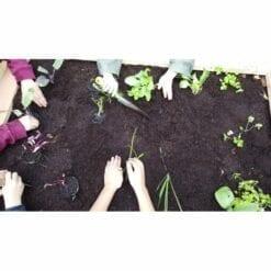 kit de jardinage légumes pour enfants - mon premier potager - will up